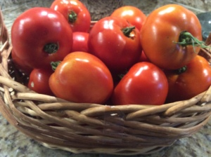My basket of Celebrity and Early Girl tomatoes that I am going to use instead of Roma Tomatoes this time
